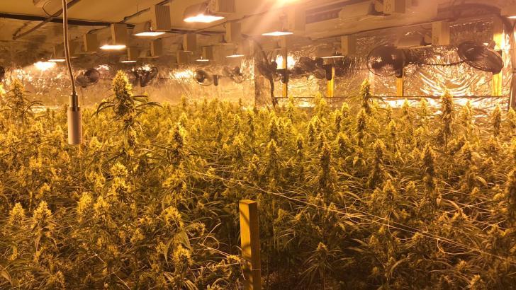 La Policía local de Chiva ayuda a desmantelar una plantación de marihuana