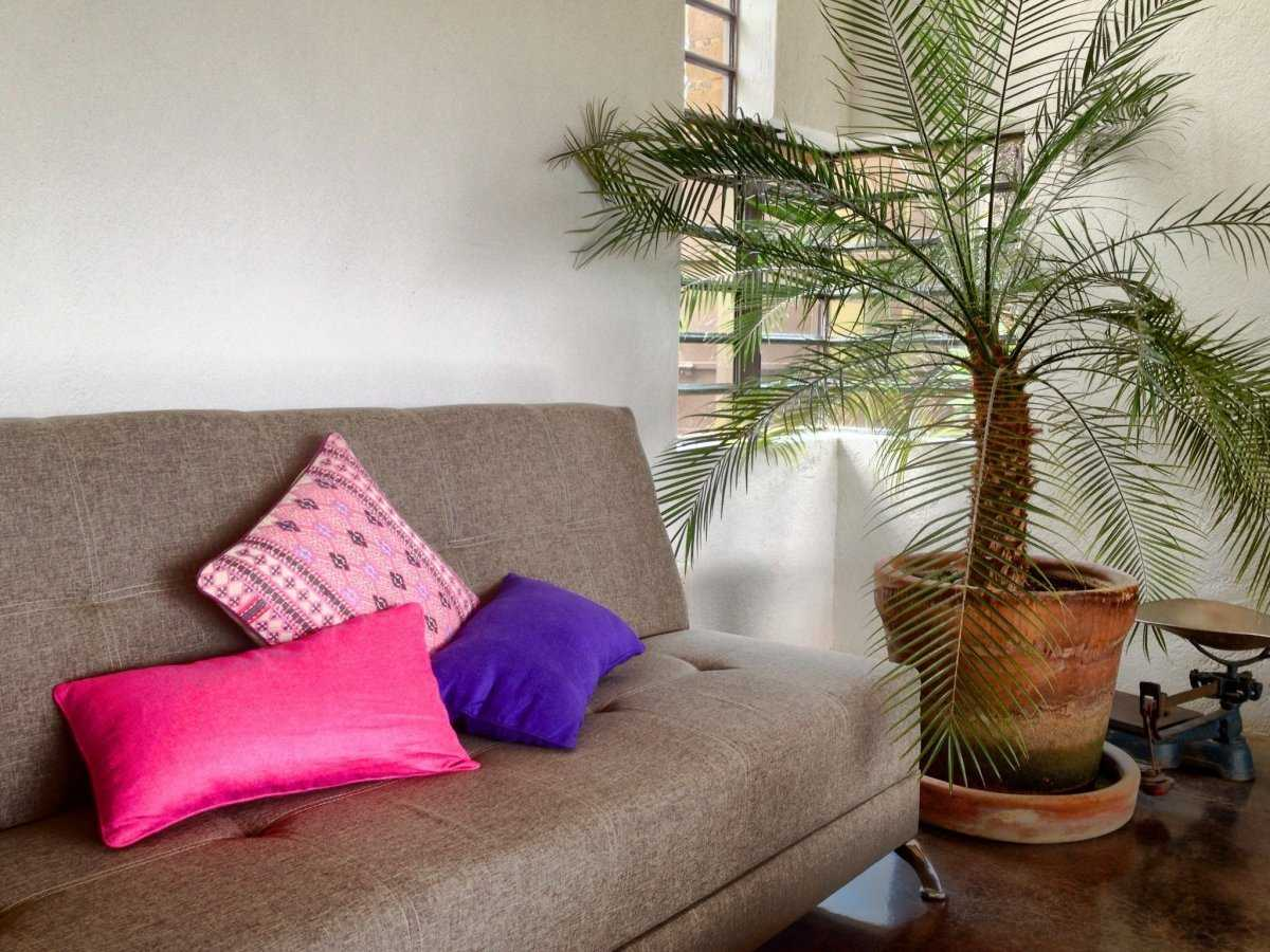 komnatnaya-palma-foto-video-vidy-palm-nazvanie-i-opisanie-rasteniya-1