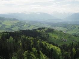 Wald, Laupen, Linthebene