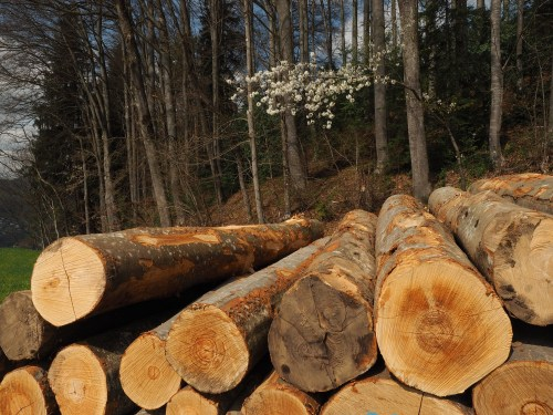 Frisches Holz unterhalb Lauf