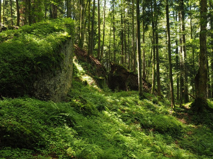 Felssturzgebiet 1816