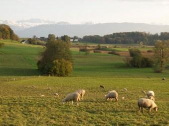 Lützelsee