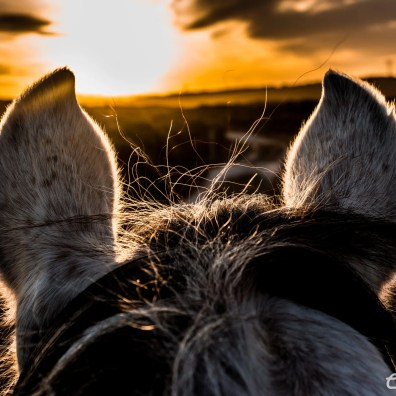 Between a horse's ears