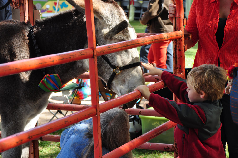 A child gets up close to a donkey at the UTM Quad city petting zoo