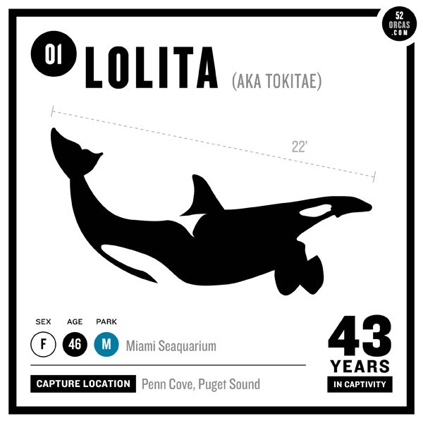 Lolita: Slave to Entertainment …. another captive orca