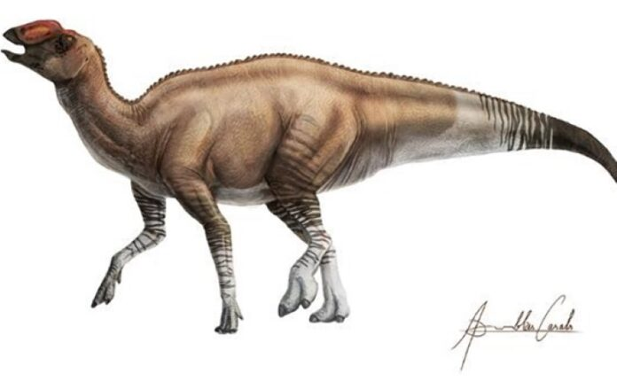 'Shovel-Billed' Dinosaur Roamed Texas 80 Million Years Ago | Paleontology