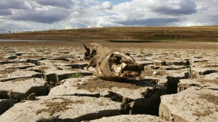 20th-century warming 'unmatched' in 2,000 years