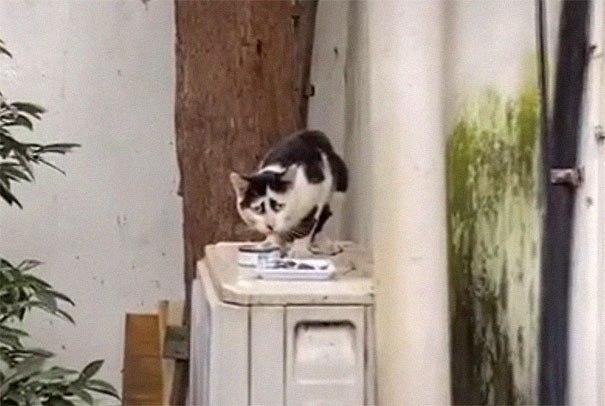 Бездомная кошка с необычным окрасом стала новой звездой сети