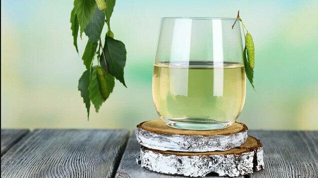 Названы целебные свойства березового сока