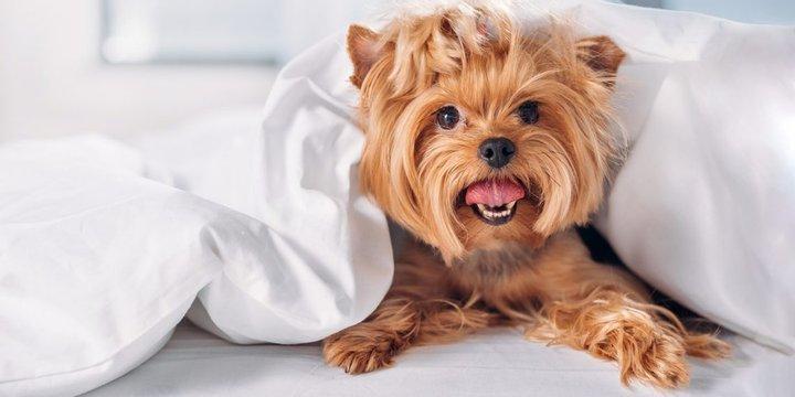 Названы лучшие породы собак для проживания в квартире. Фото