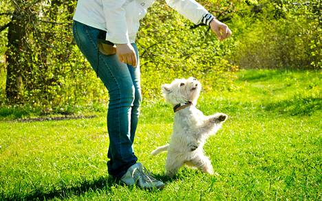It is nice to play and move with dogs.