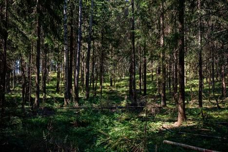 Jaakko Temme's forest in Iiti.