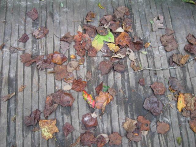 VA leaves on bridge