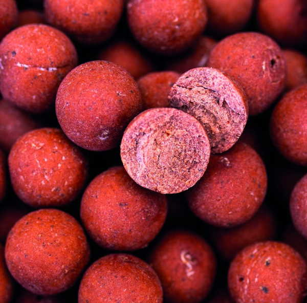 proline Garlic-robin-red 1
