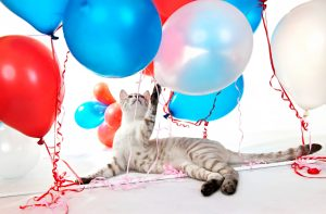 Cat playing with balloons