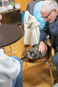 Rent the cat cafe