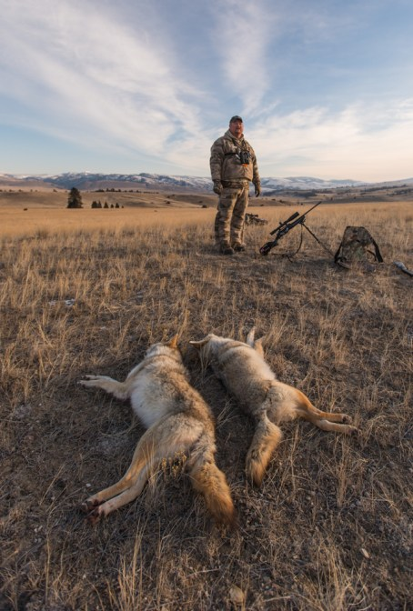 HSM, ammo, ammunition, coyote, matt, piippo, calling, predator, shot, placement, best, where, to, shoot, a
