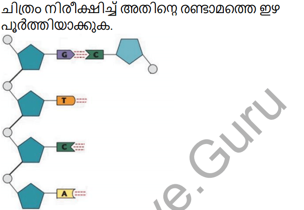 Kerala Syllabus 10th Standard Biology Solutions Chapter 6 Unravelling Genetic Mysteries in Malayalam 15