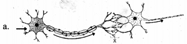 Kerala SSLC Biology Chapter 1 Questions and Answers Sensations and Responses 5