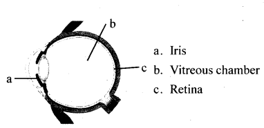 Kerala Syllabus Class 10 Biology Solutions Chapter 2 Windows of Knowledge 14