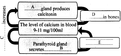 Kerala Syllabus Class 10 Biology Solutions Chapter 3 Chemical Messages for Homeostasis 2