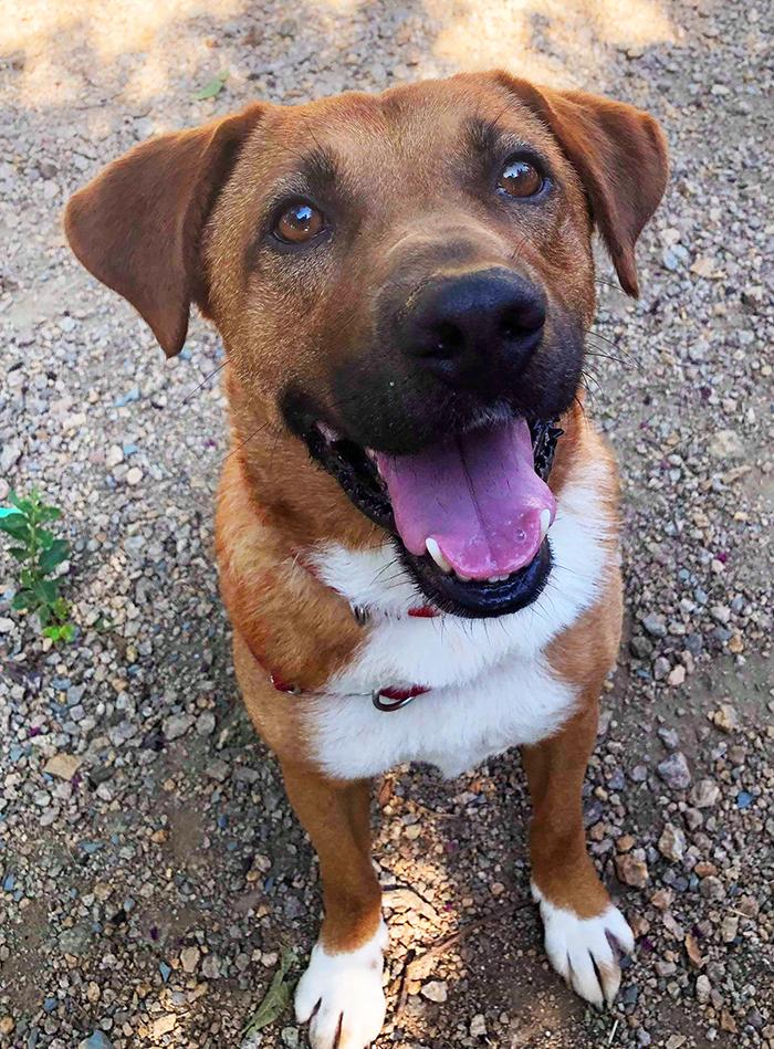 Austin (the dog)