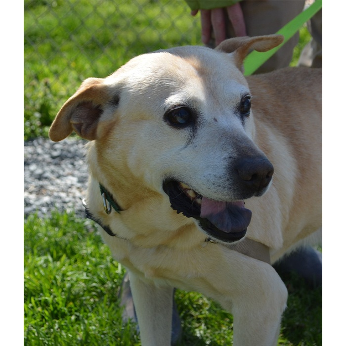 Dexter, adopt, dog