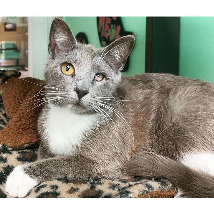 Ali, cat, adopt