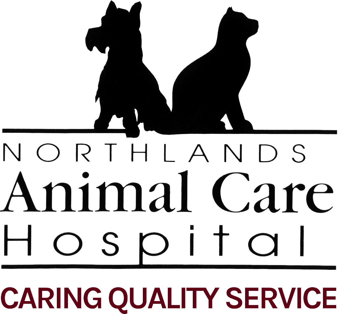 Avian Medicine And Surgery Northlands Animal Care Hospital