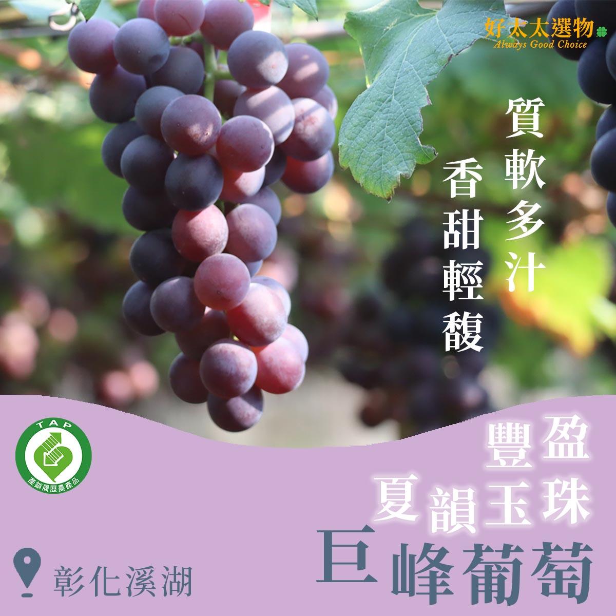 豐盈夏韻玉珠彰化溪湖巨峰葡萄