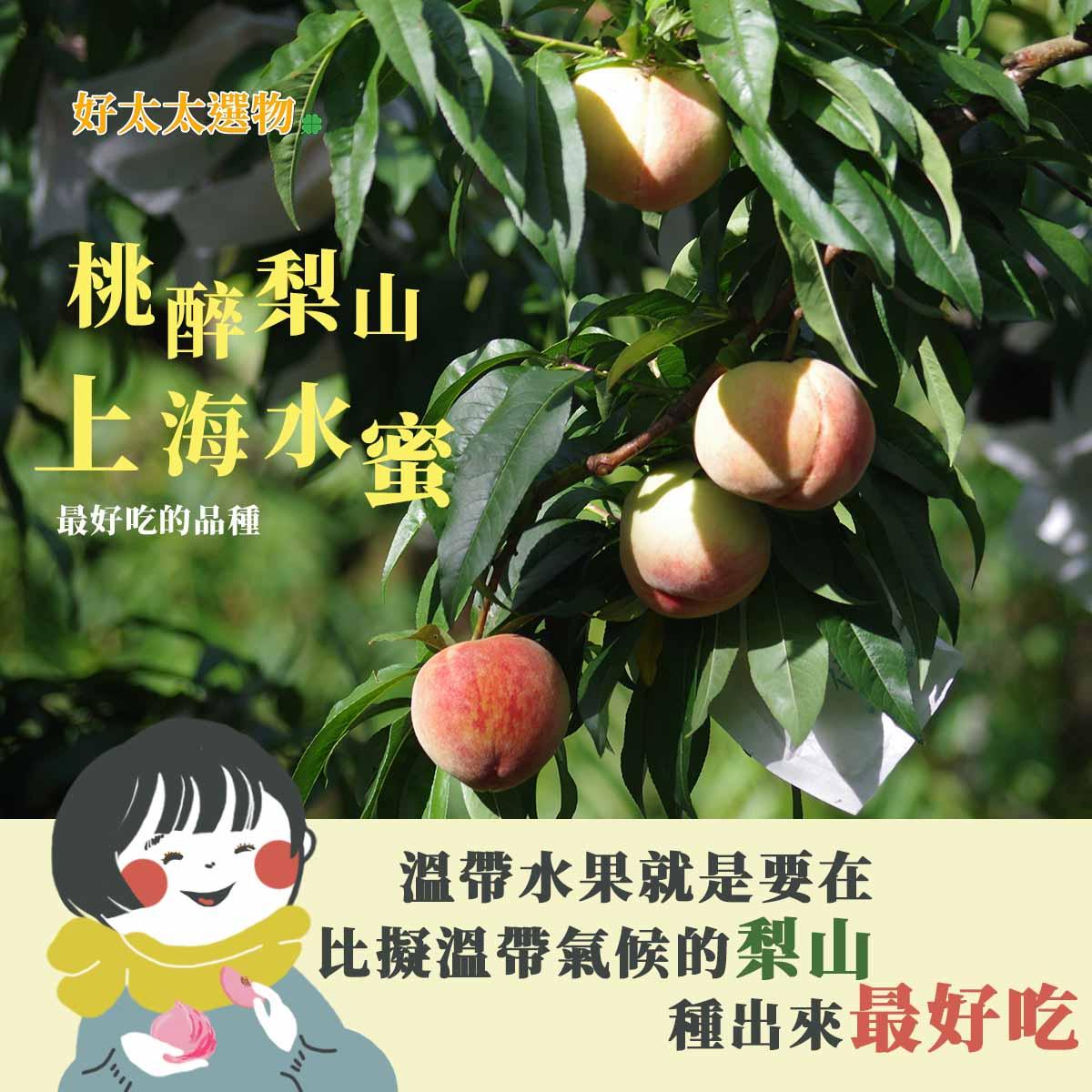 梨山地區的氣溫溫差能孕育出台灣最好吃的上海水蜜桃。