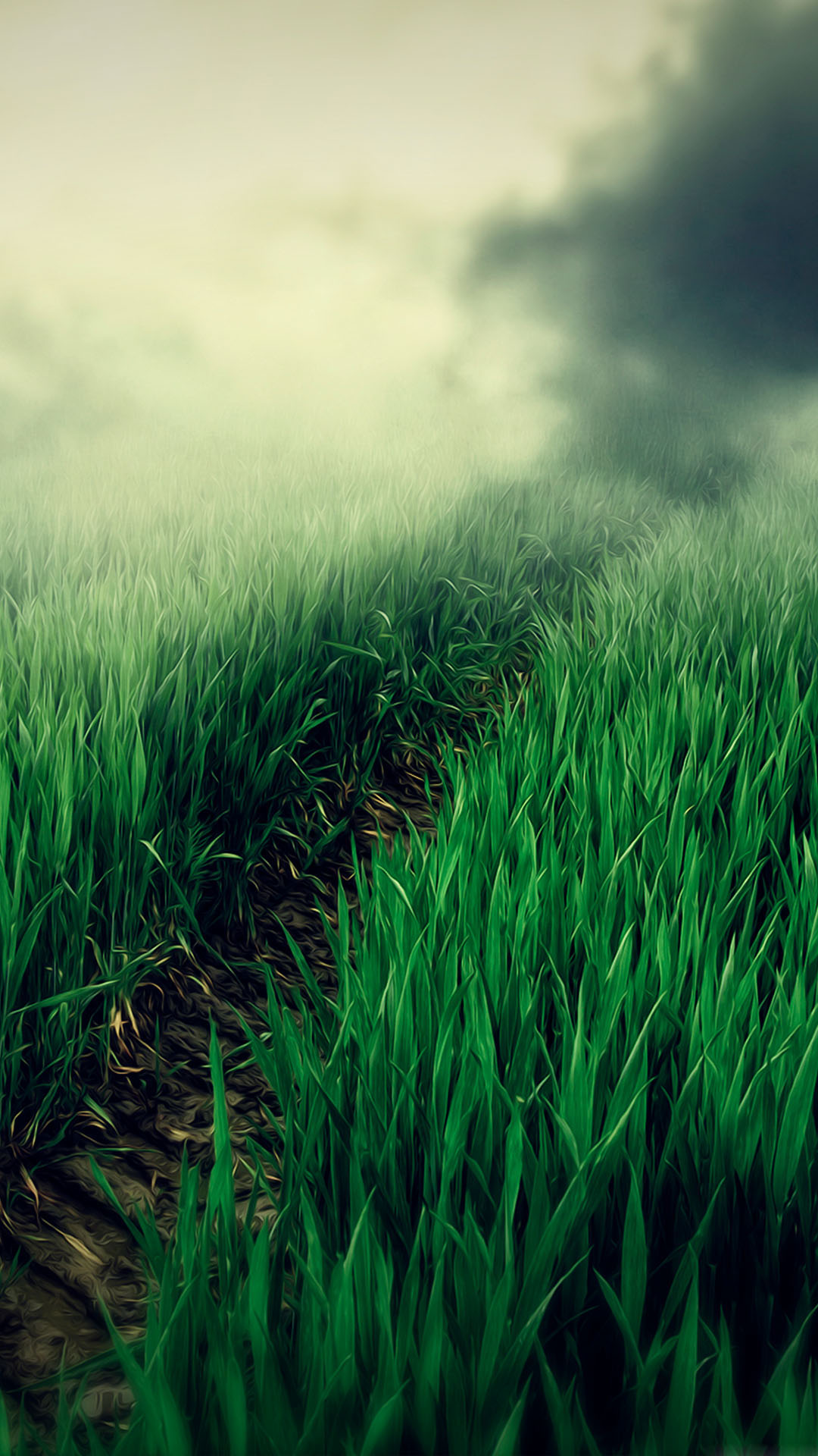 Foggy Grass Field Path Best Htc One Wallpapers