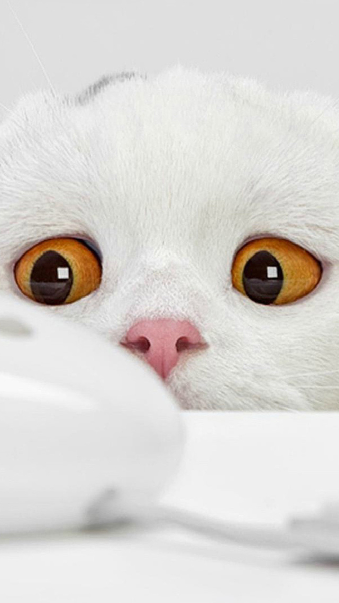 Htc M8 3d Wallpaper Funny White Cat Best Htc One Wallpapers Free And Easy