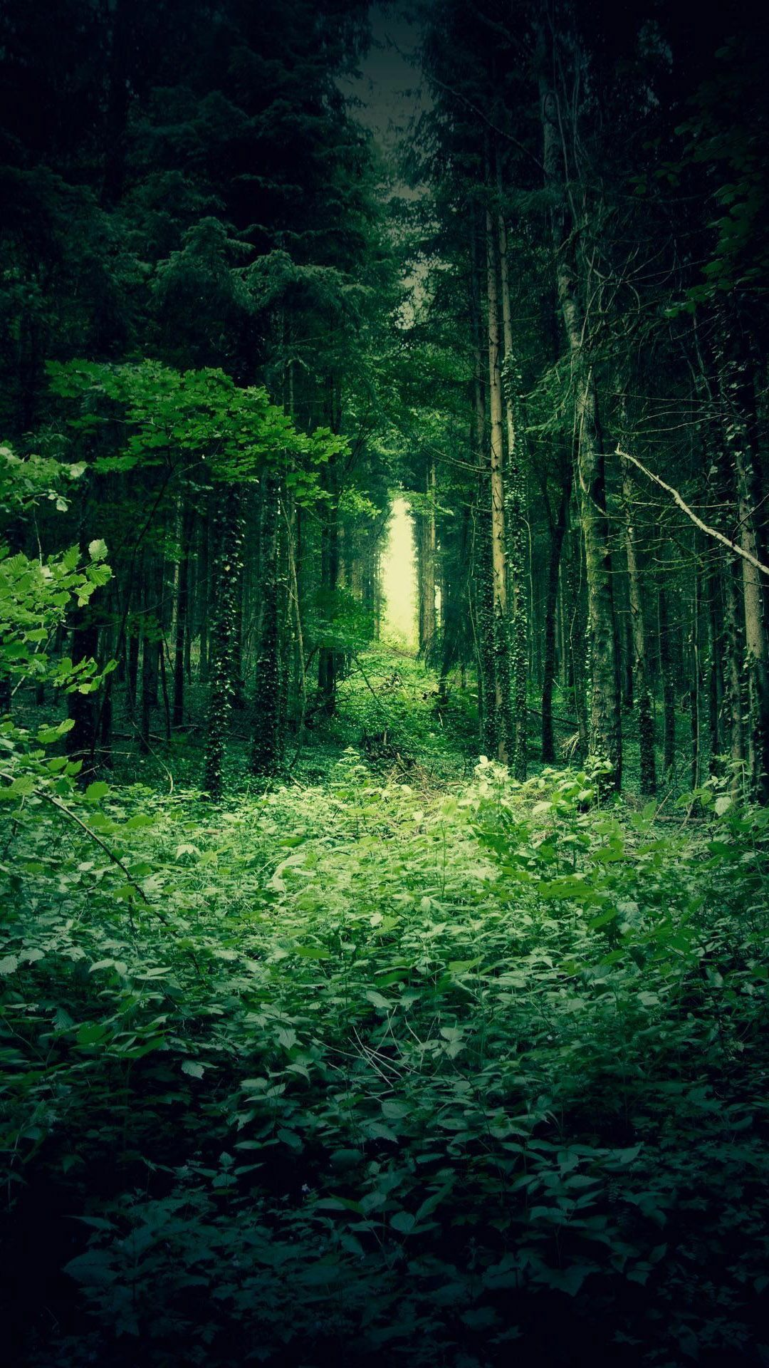Green Forest Trees  Best Htc One Wallpapers