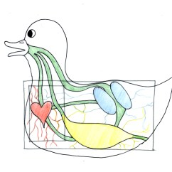 Duck Wing Diagram Chrysler Sebring Radio Wiring Concept Jing Zhou Kevin Plath House Transit Design On Infrastructure Which Then Narrowed Down To The Efficiency Of Movement Throughout Site This Uses A Living Thing In Case