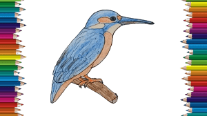 drawing bird draw easy kingfisher beginners coloring tutorial