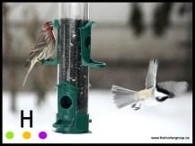 blog birds 1