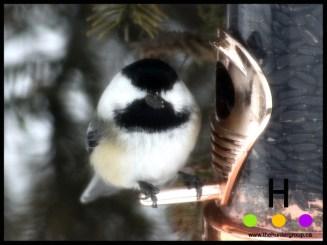blog birds 3