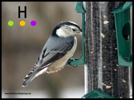 blog birds 5