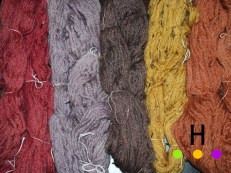 Naturally dyed yarns (from left): lac, logwood, cutch with iron, marigold and cutch