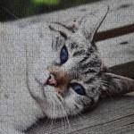 Image of cat puzzle