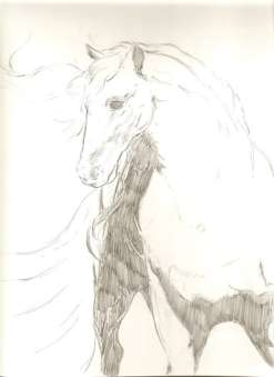 stallion-1-WORDPRESS