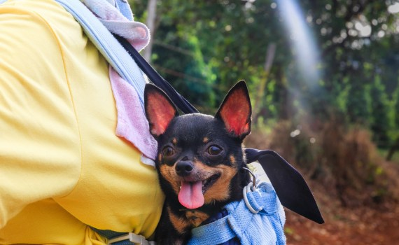 go on vacation with your dog