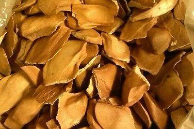 50 Semillas De Caobazopilote Garanta Autenticidad