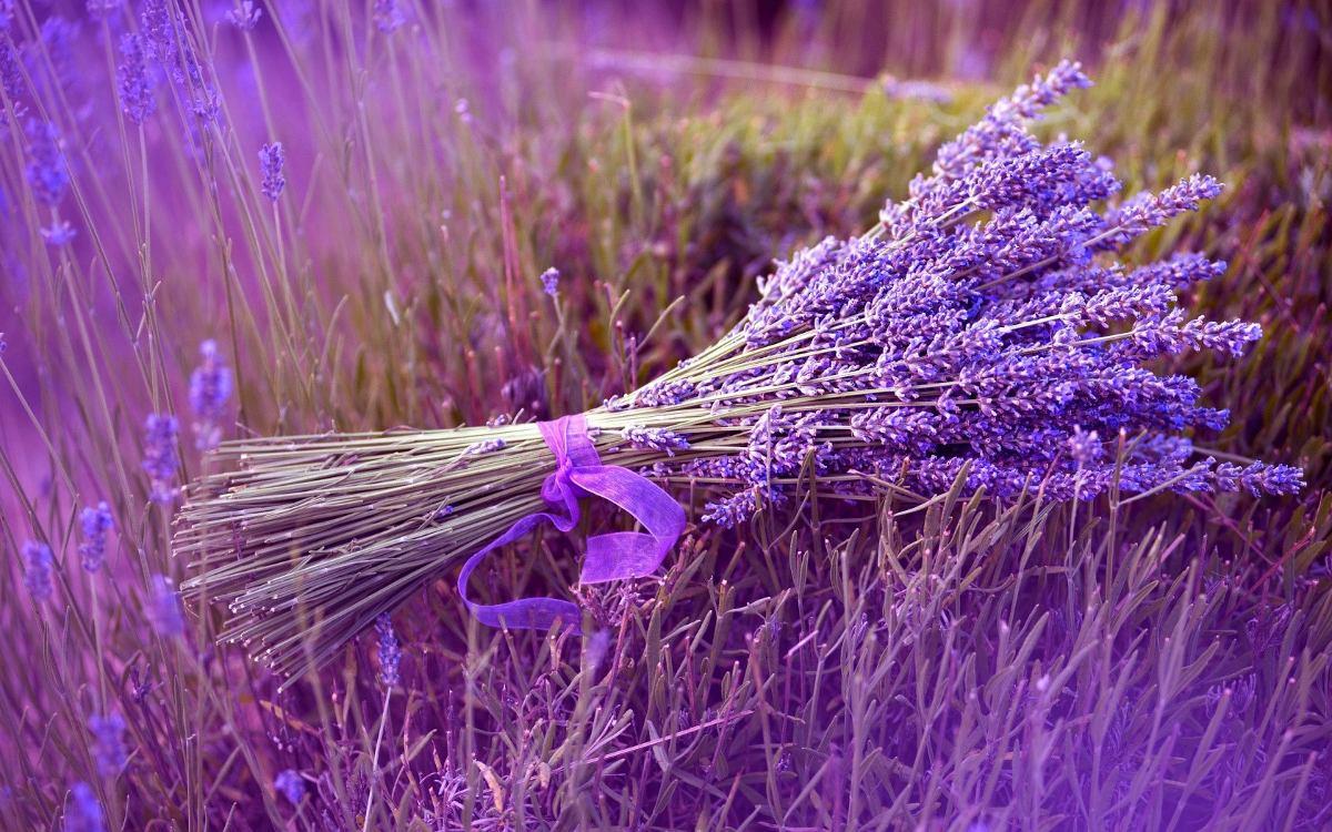 Alfazema Lavanda Francesa Sementes Importadas Flor Pra Mudas  R 799 em Mercado Livre