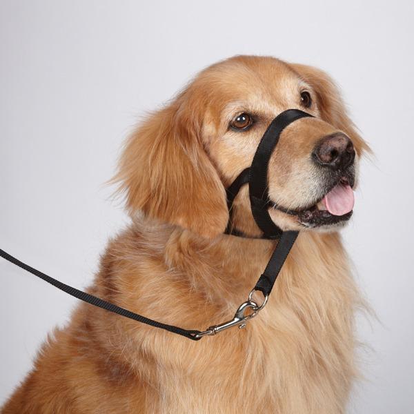 Dog Mouth Diagram Collar De Cabeza Para Perro Gentle Leader Halti 363