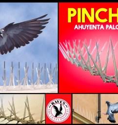 cuervo ahuyenta espanta palomas licencia original raven 440 00 en mercado libre [ 1200 x 794 Pixel ]