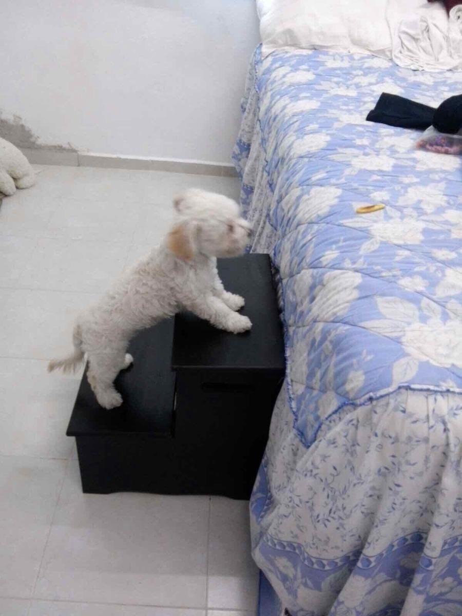 Escaleras De Madera Para Perros   75000 en Mercado Libre