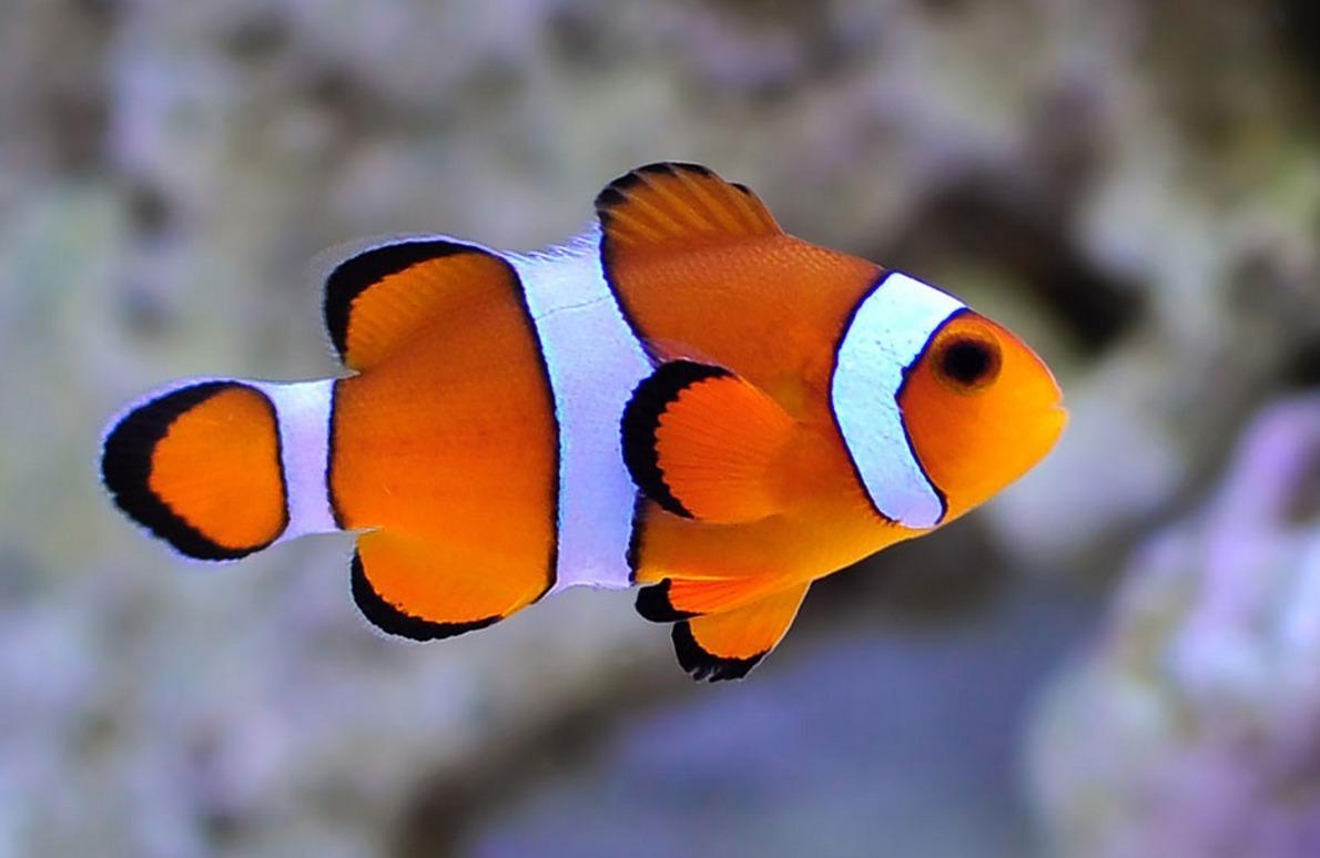 peixes signo