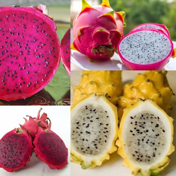 4df05718a3470 20+ Pitahaya Fruta Pictures and Ideas on STEM Education Caucus